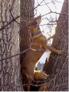 Mack Climbing Trees!