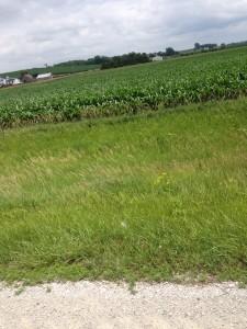 corn fields 2